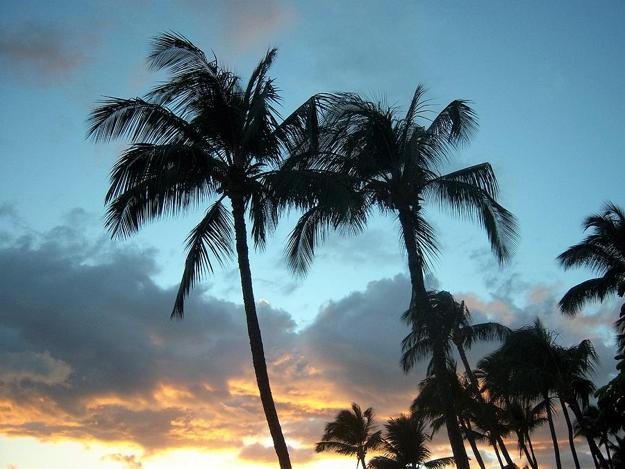 Trees Photograph - Palm Trees At Sunset by Charles HALL