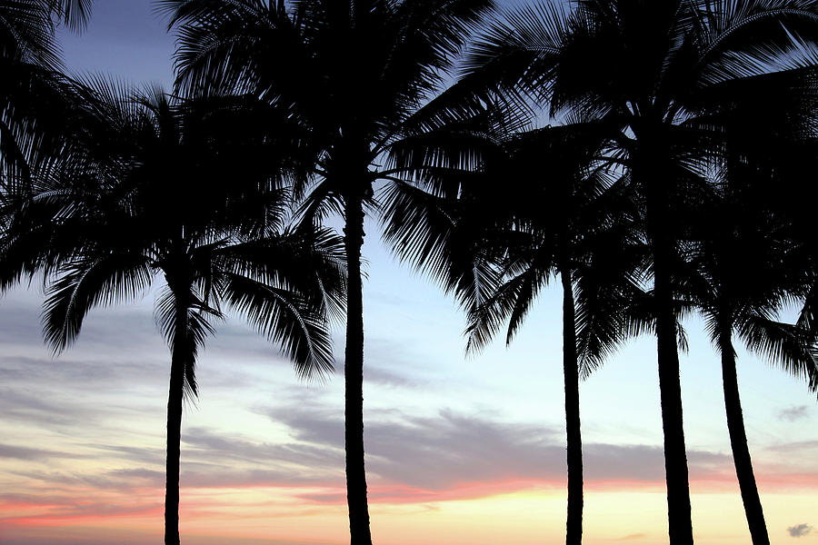 Palm Trees Photograph - Palm Trees At Sunset by Dan Pearce