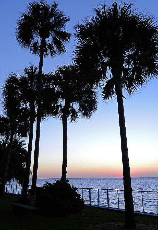 Palm Trees At Sunset Photograph