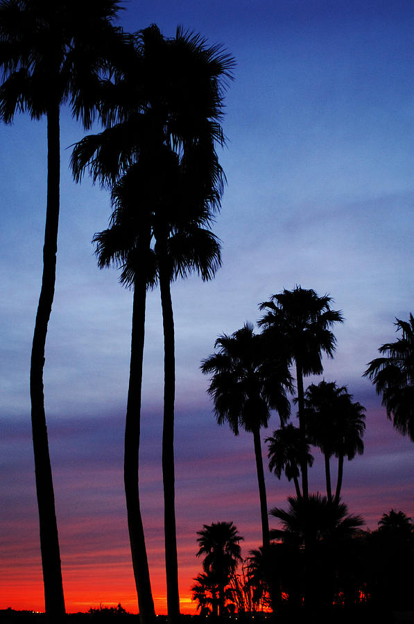 Palm Trees Photograph - Palm Trees At Sunset by Jill Reger