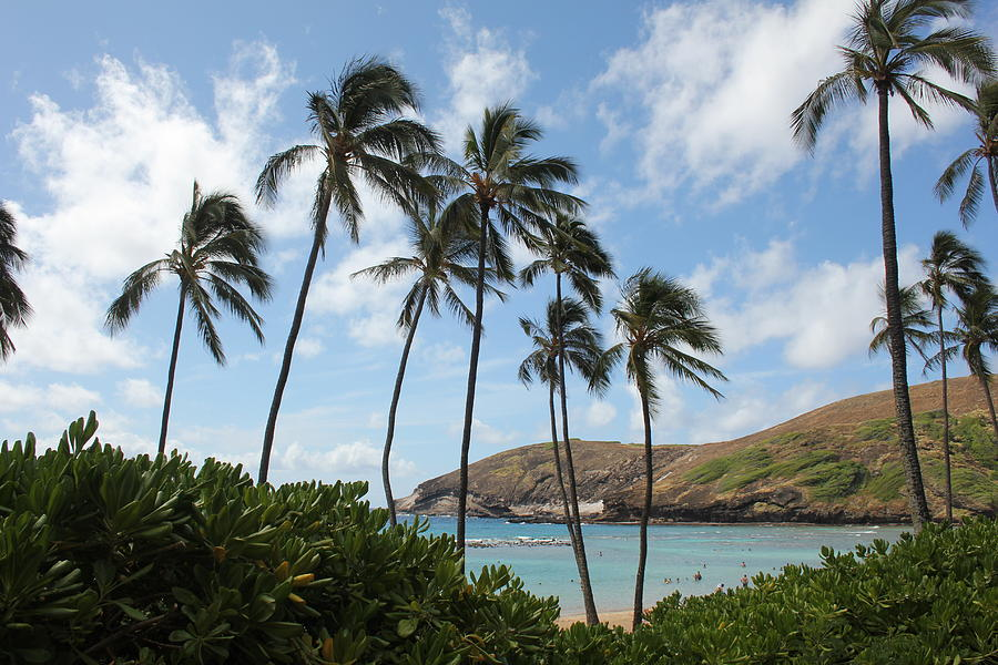 Palm Trees Blowing In The Hawaiian Breeze Photograph By