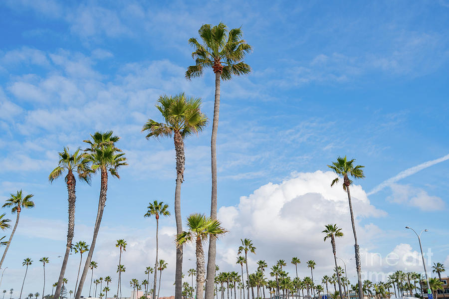 Palm Trees, Clouds And Blue Sky Photograph