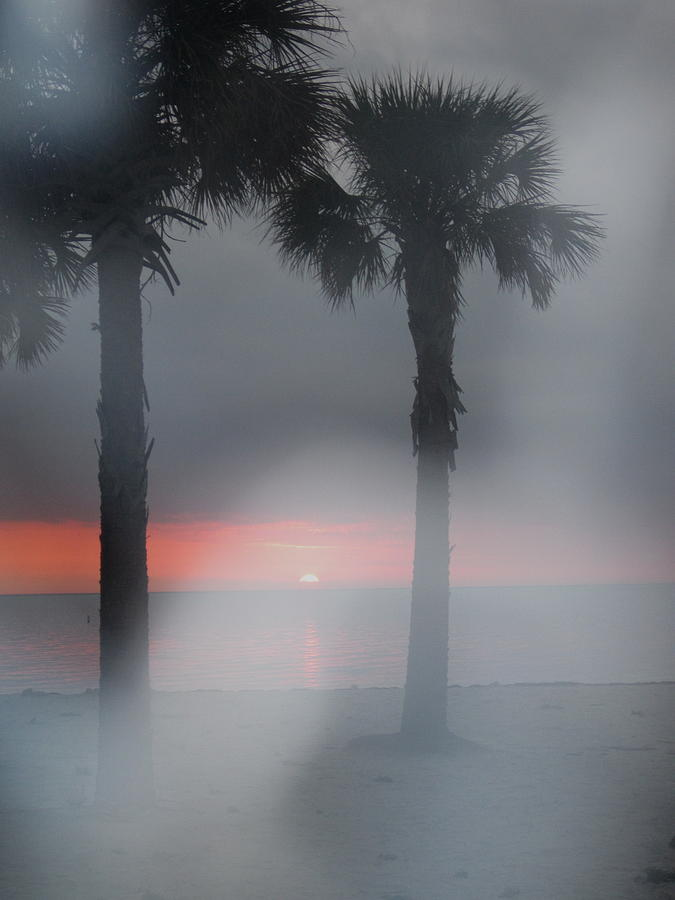 Trees Photograph - Palm Trees In The Fog by Penfield Hondros