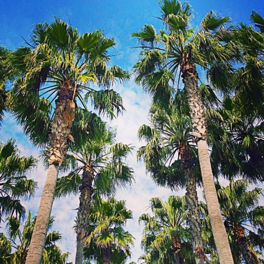 Plant Photograph - #palm #trees Just Make Me #smile by Shari Warren