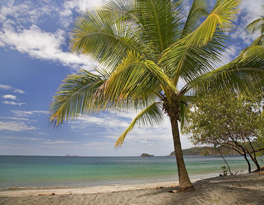 Palm Trees Line Penca Beach Costa Rica Photograph by Tim Fitzharris