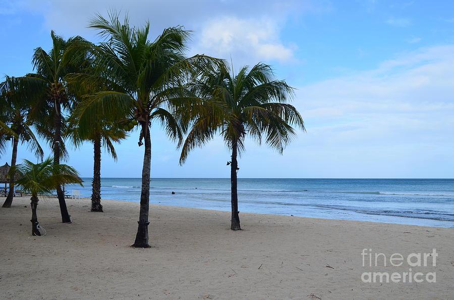 Palm Trees On Palm Beach In Aruba Photograph By DejaVu Designs