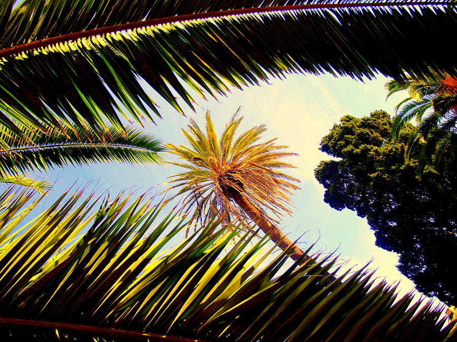 Palm Trees Painting by Ted Hebbler