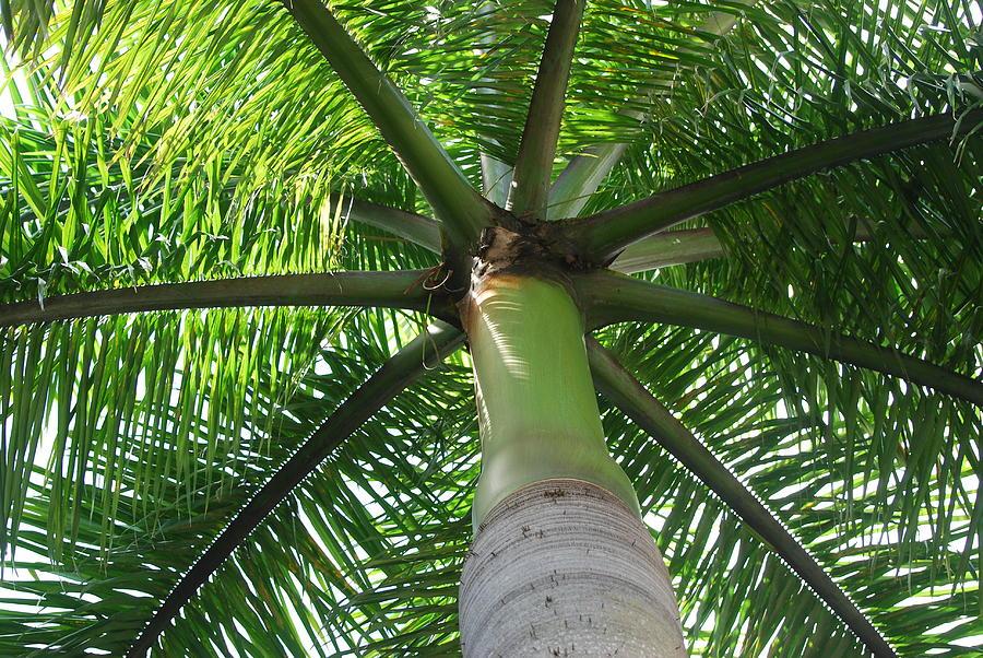 Macro Photograph - Palm Unbrella by Rob Hans