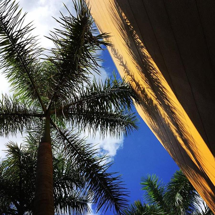 Miami Photograph - Palm With Yellow Building by Juan Silva