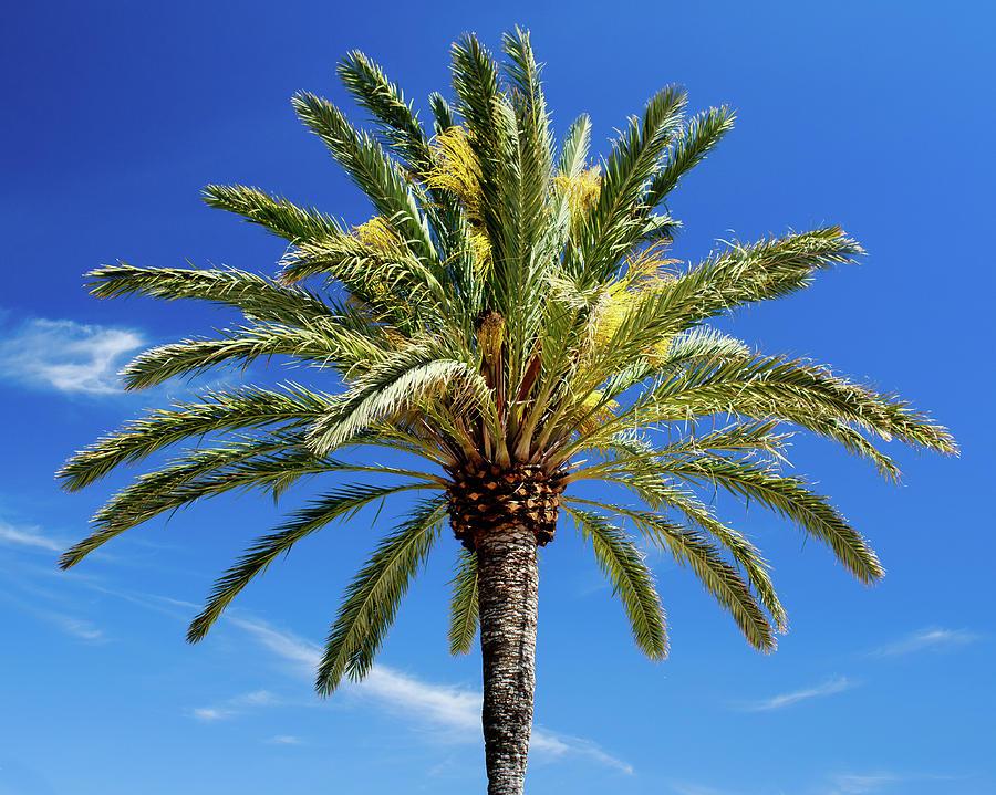 Palma Palma Photograph