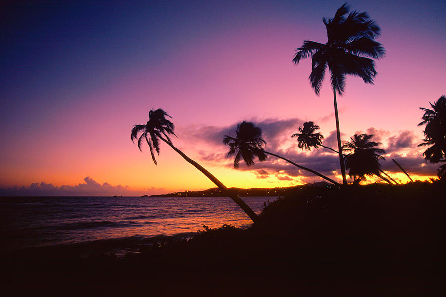 Palm Trees Photograph - Palmas Del Mar Sunset Puerto Rico by George Oze