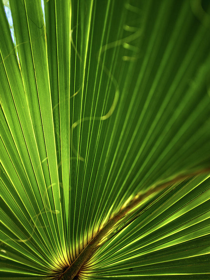 Palmetto by Teresa Mann