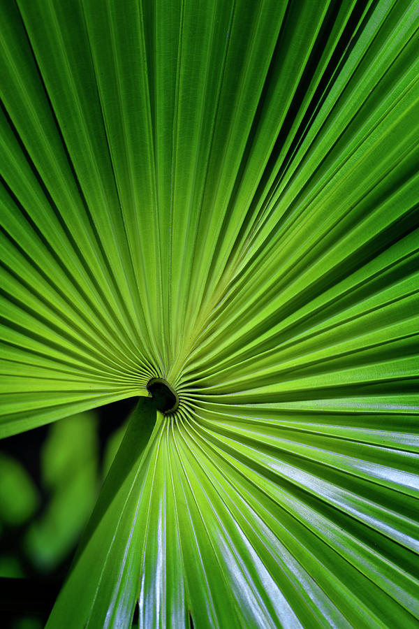 Bosky Photograph - Palmgreen by Al Hurley