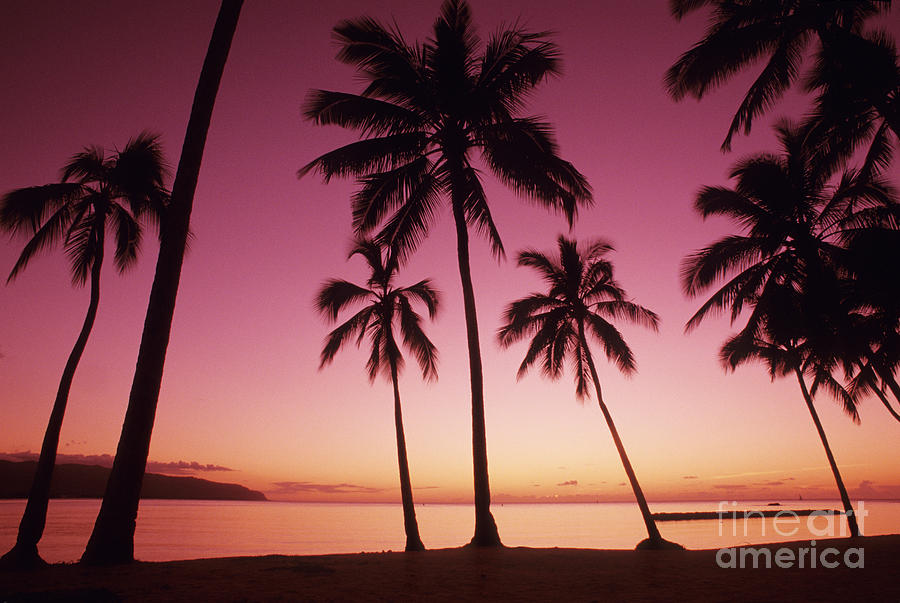 Beach Photograph - Palms Against Pink Sunset by Carl Shaneff - Printscapes