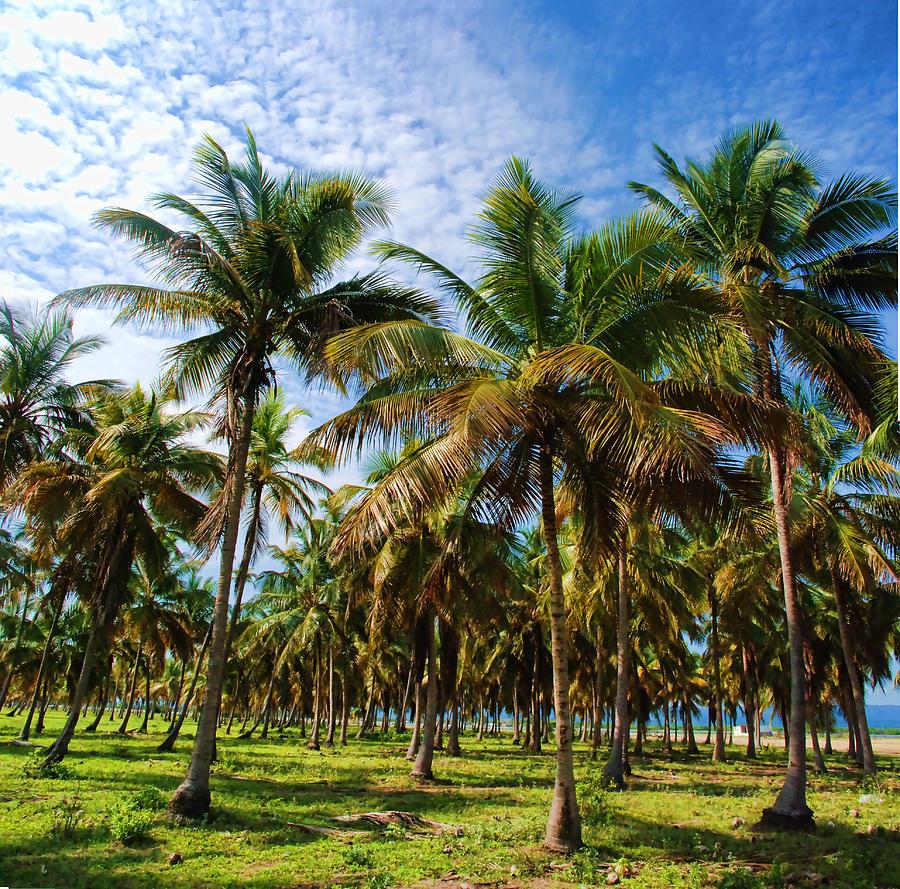 Palms Photograph - Palms And Sky by Galeria Trompiz