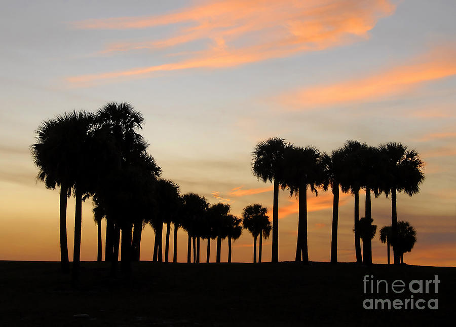 Palm Trees Photograph - Palms At Sunset by David Lee Thompson