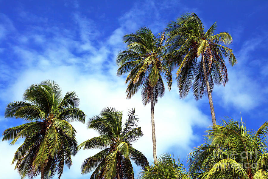 Palms Photograph - Palms by John Rizzuto