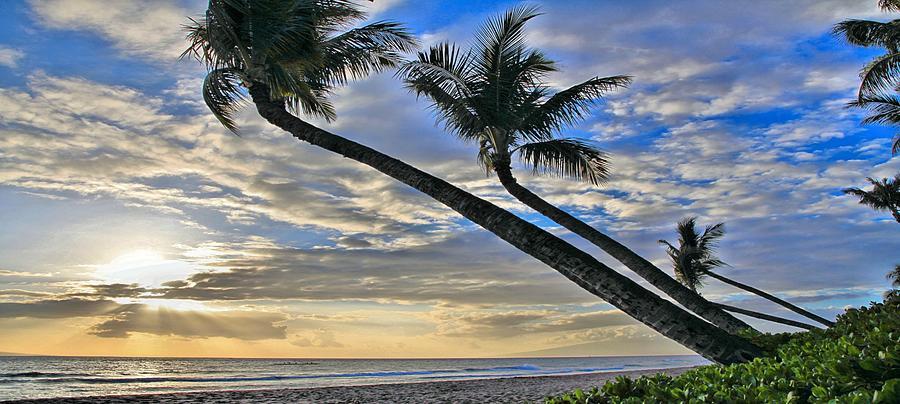 Palms Of Kaanapali Photograph