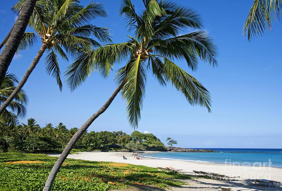 Aqua Photograph - Palms Over Beach II by Ron Dahlquist - Printscapes