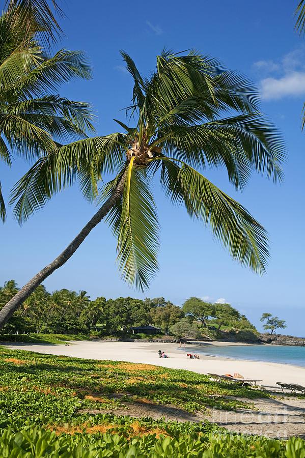 Aqua Photograph - Palms Over Beach by Ron Dahlquist - Printscapes
