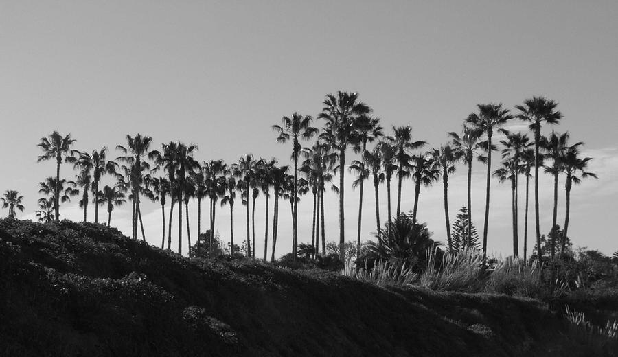 Landscapes Photograph - Palms by Shari Chavira