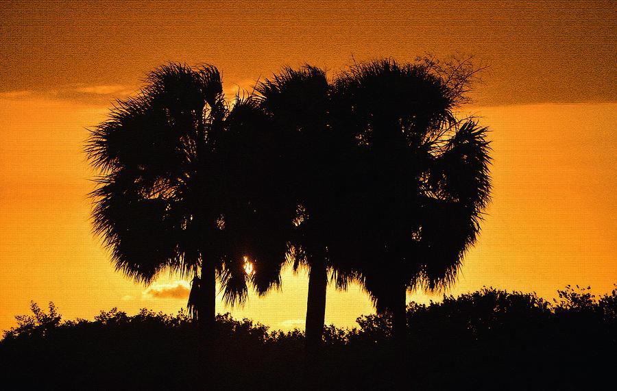 Palm Trees Photograph - Palmset by David Lee Thompson