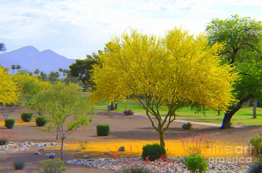 Palo Verde Tree by Mary Deal