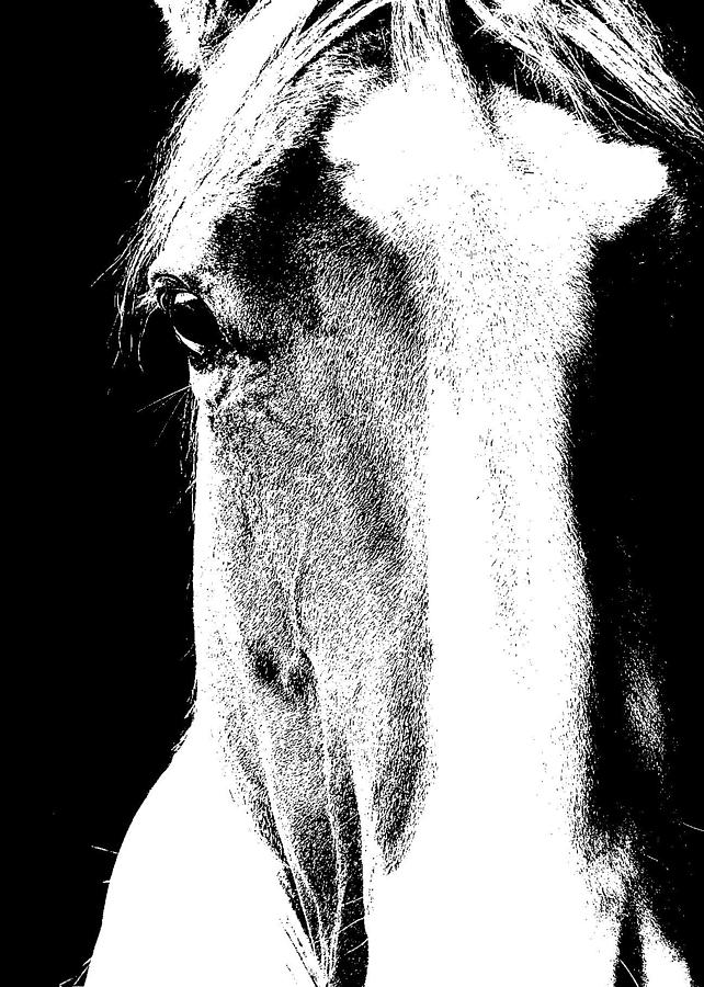Horse Photograph - Palomino Art by JAMART Photography