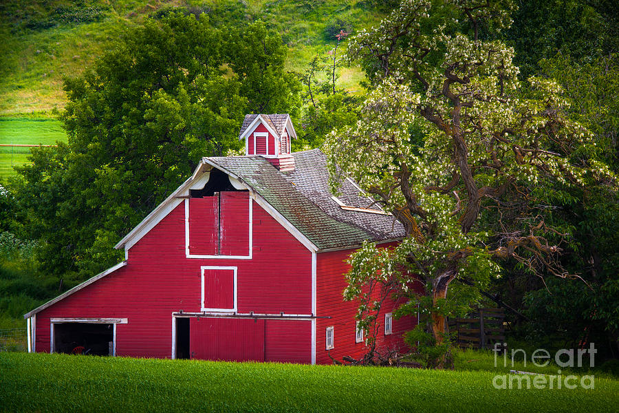 America Photograph - Palouse Barn Number 9 by Inge Johnsson
