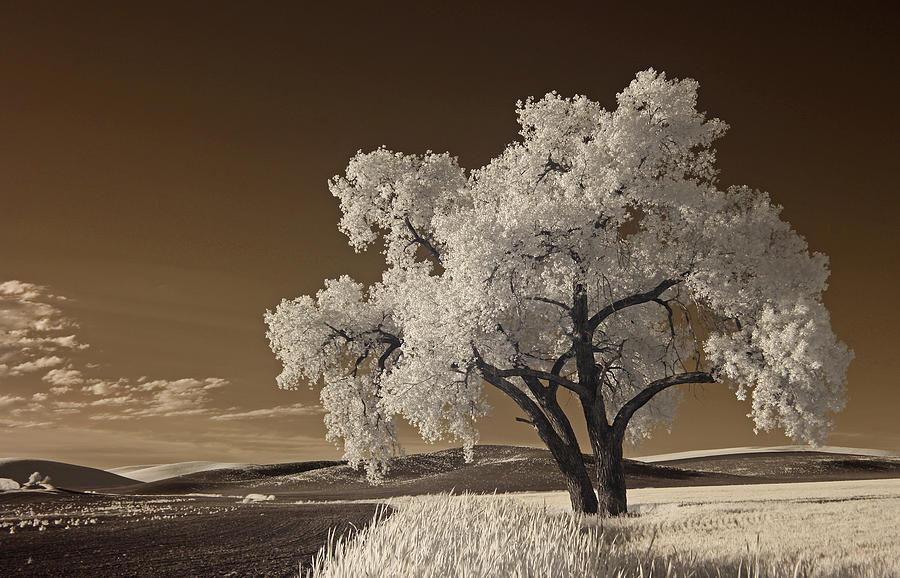 Palouse by Bob Cournoyer