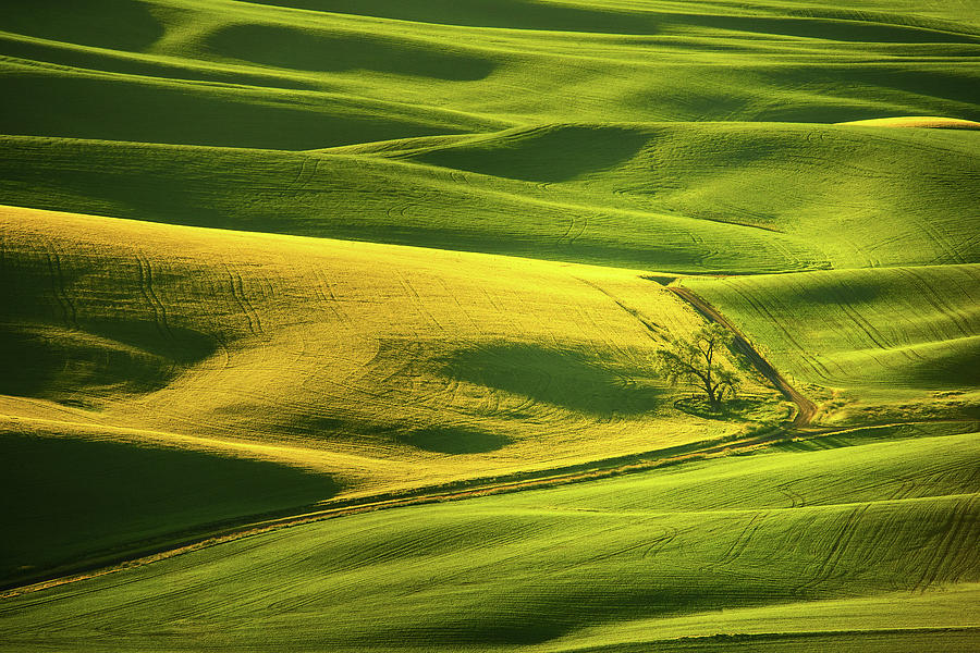 Palouse Shades of Green by Dan Mihai