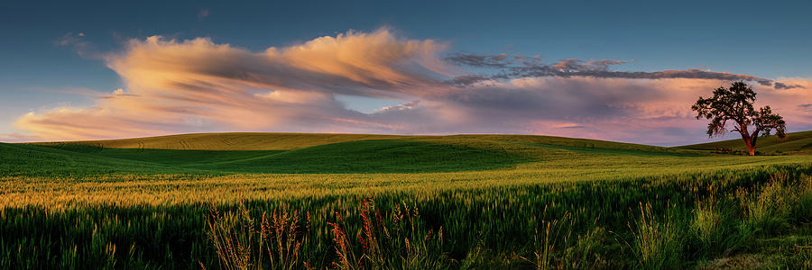 Palouse Tree of Life by Dan Mihai