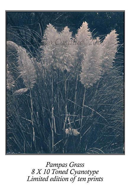 Grass Photograph - Pampas Grass Toned Cyanotype by Gustavo Castilla