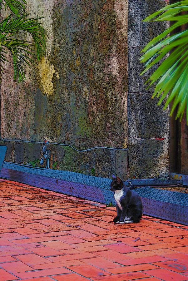 Panama Photograph - Panama Cat by Robert Boyette