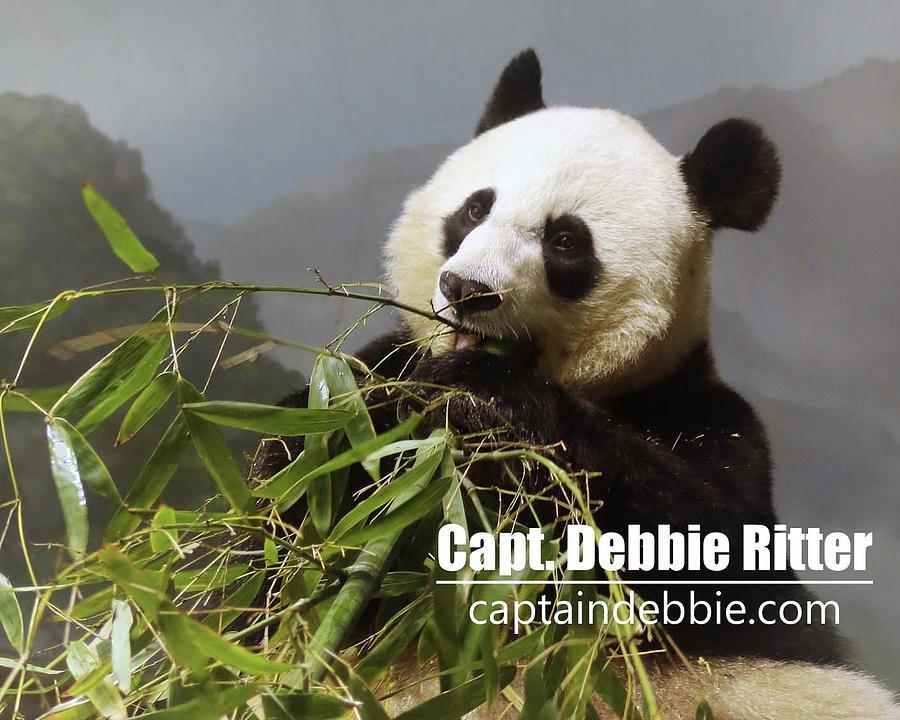 Panda Bear Photograph - Panda 6227 by Captain Debbie Ritter