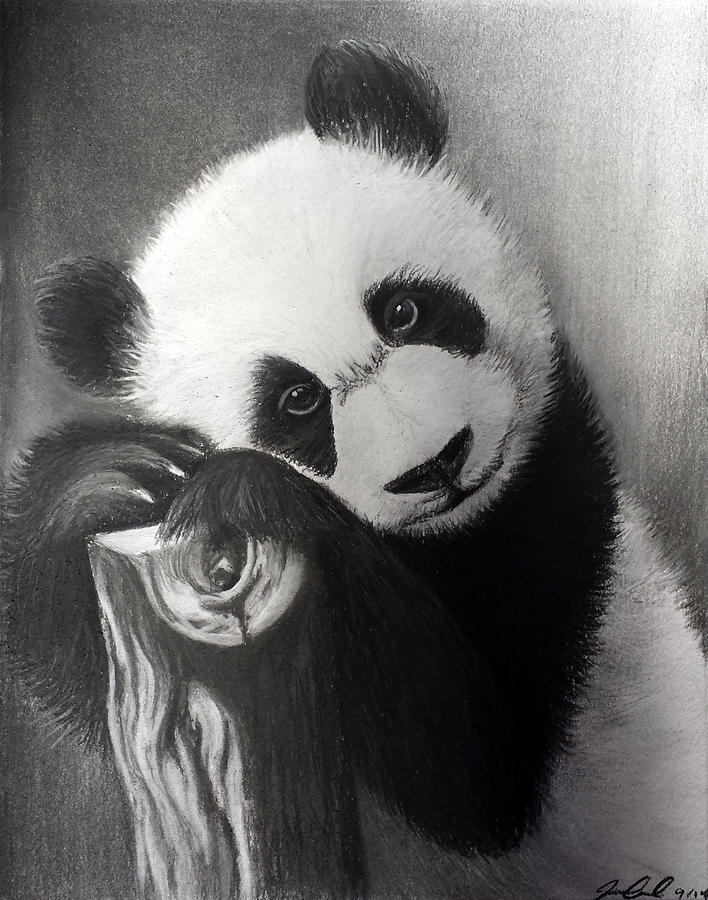 картинки милых панд карандашом что, думаю