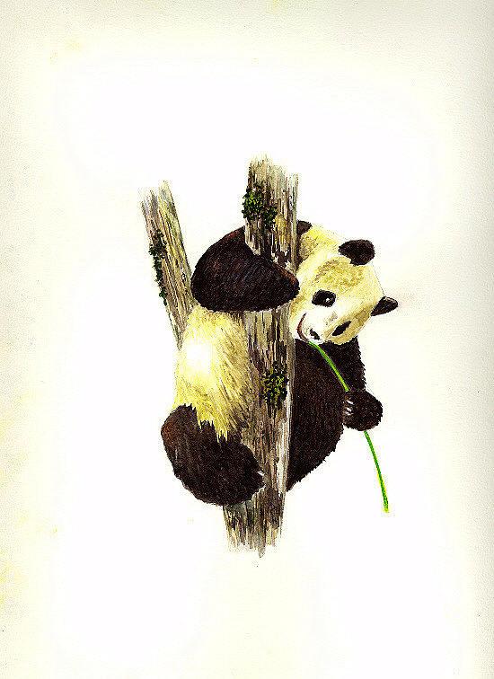 Panda Painting - Panda by Michael Vigliotti