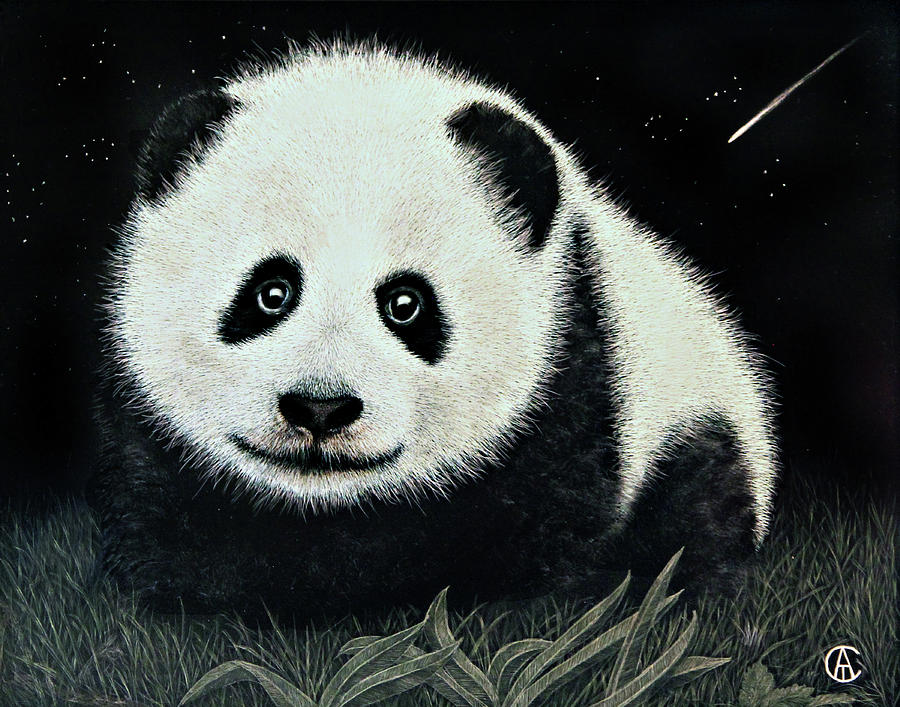 Panda Shooting Star by Angie Cockle