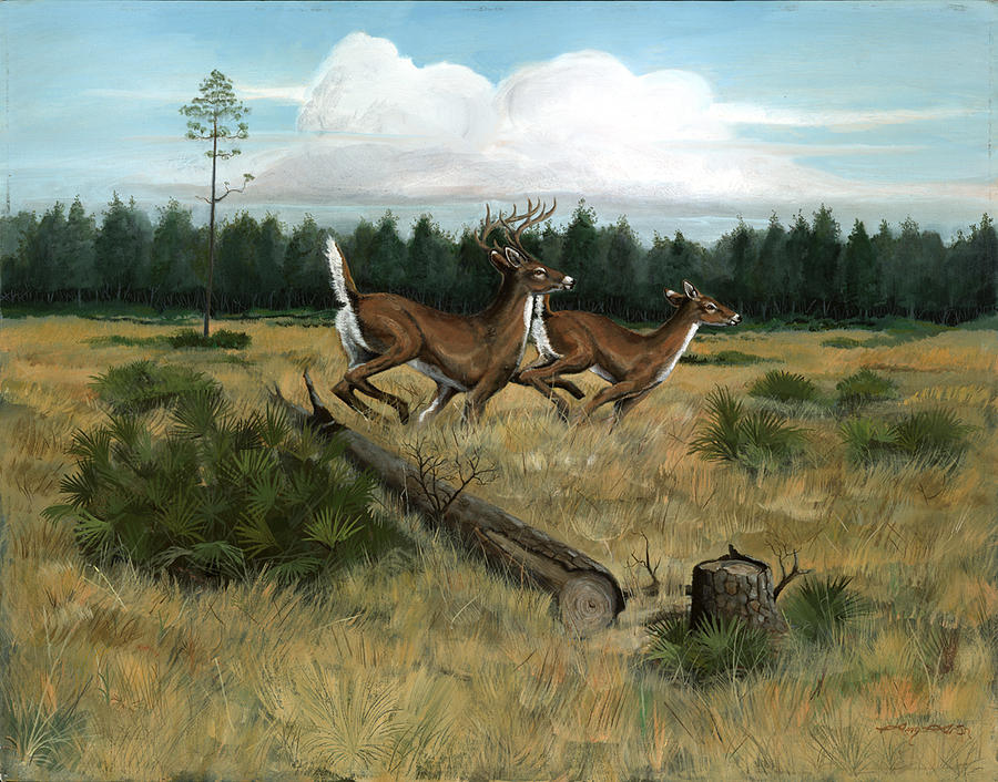Whitetail Deer Painting - Panhandle Deer by Timothy Tron