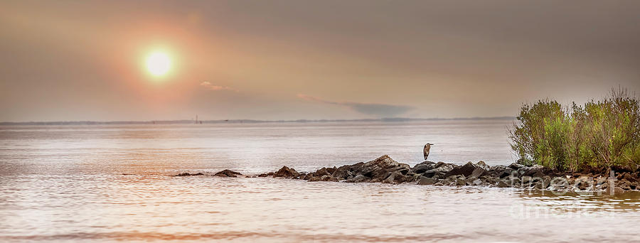 Panorama of a Great Blue Heron standing on a rock jetty by Patrick Wolf