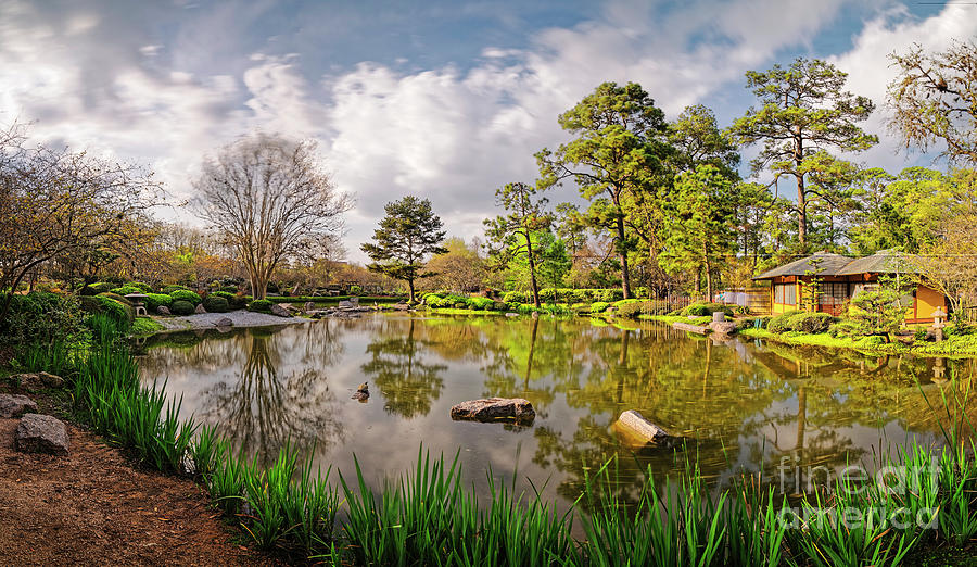 Houston Photograph   Panorama Of Late Afternoon At The Houston Japanese  Garden In Hermann Park