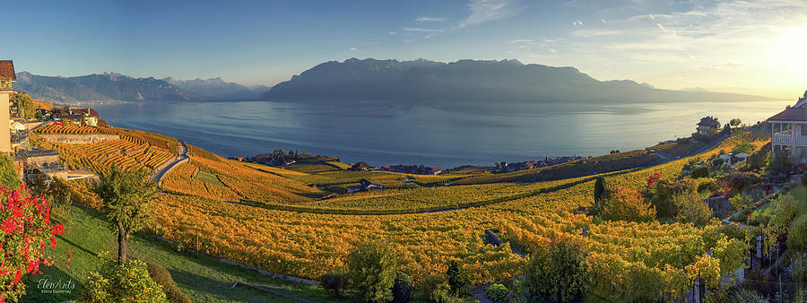 Panorama on Lavaux region, Vaud, Switzerland by Elenarts - Elena Duvernay photo