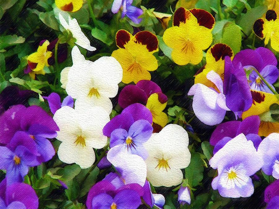 Pansies Photograph - Pansies by Sandy MacGowan