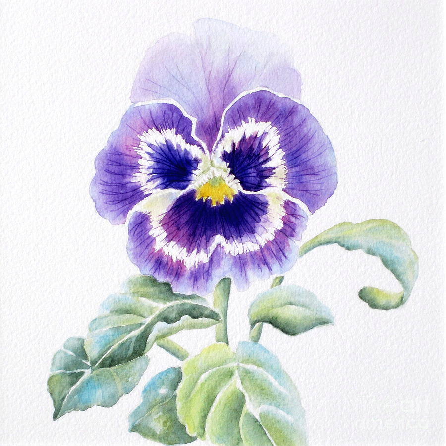 Pansy Painting By Deborah Ronglien