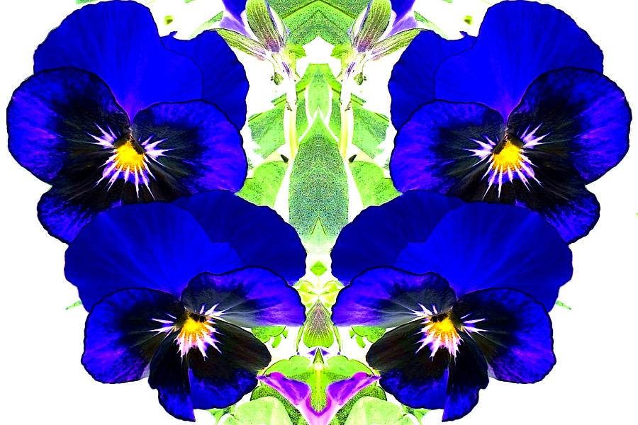 Pansies Photograph - Pansy Pattern by Marianne Dow
