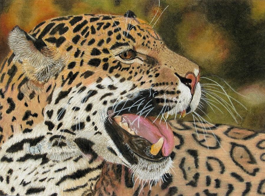 Panthers Drawing - Panthera by Lori Hanks