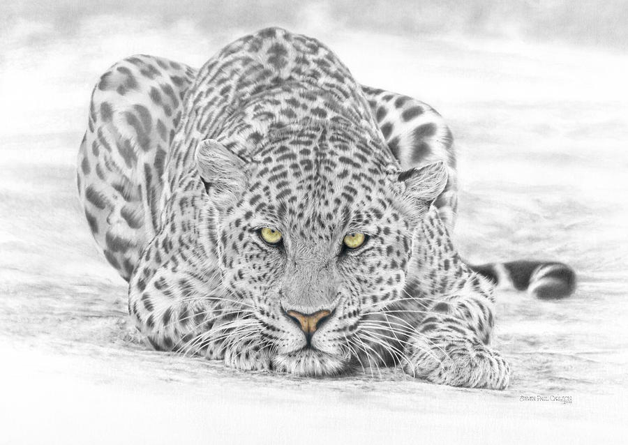 Leopard Drawing - Panthera Pardus - Leopard by Steven Paul Carlson