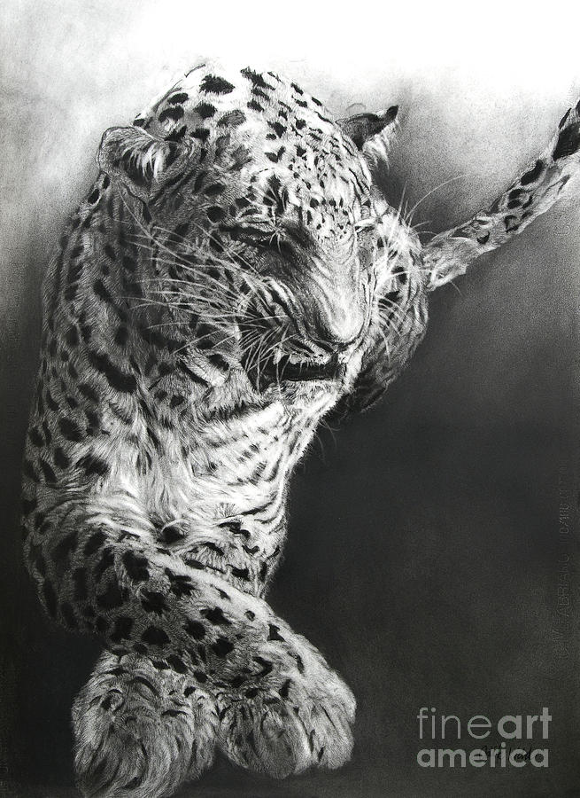 Leopard Drawing - Panthera Pardus 1 by Odile Kidd
