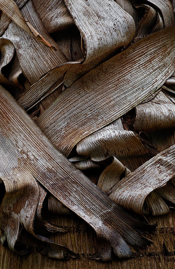 Bark Photograph - Paper Bark by Murray Bloom