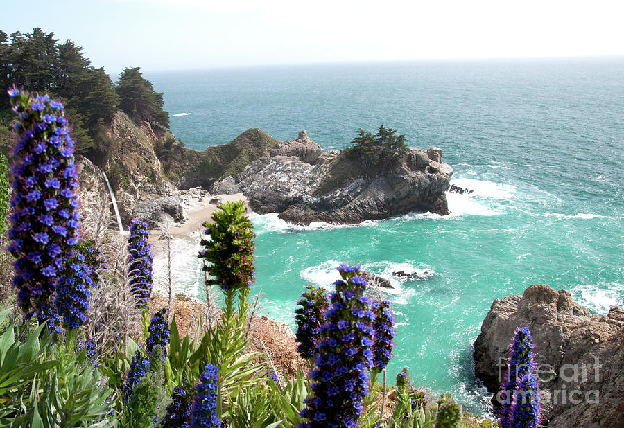 Cove Photograph - Paradise Cove by Digartz - Thom Williams